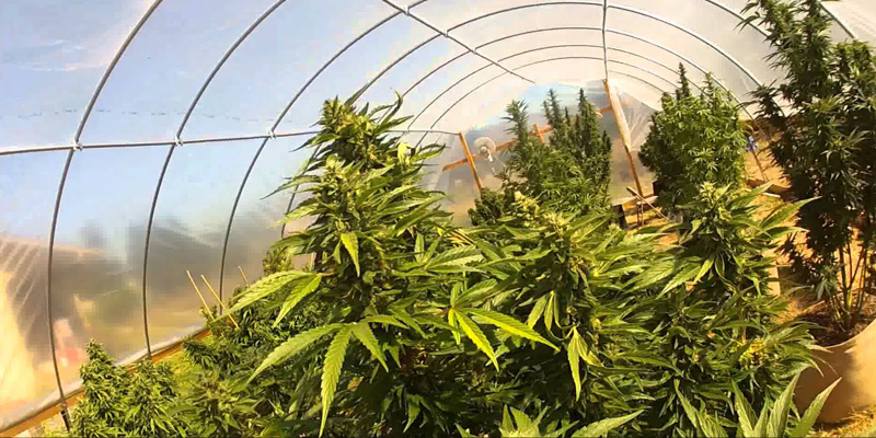 Canna Consulting to design and manage a 3 Hectare Organic Medical Cannibis Grow for WeCann Lesotho